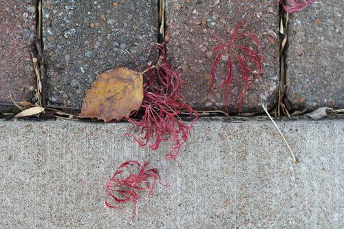 Leaves on Sidewalks