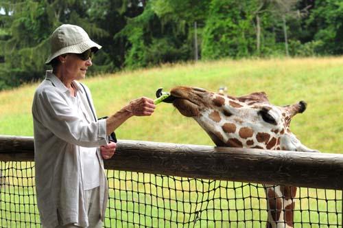 Feeding giraffes: bucket list item.